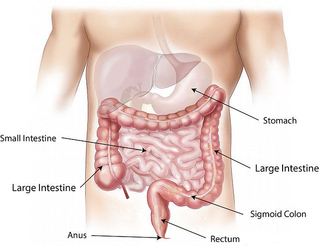 Digestive Support Supplements