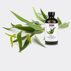 Camphoraceous Scented Oils
