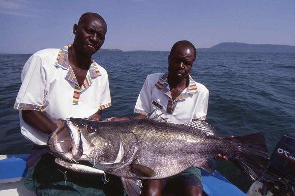 Omega-Rich-Fish-in-Lake-Victoria-Kenya